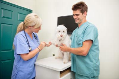 A Importância do Diagnostico por Imagem na Medicina Veterinária