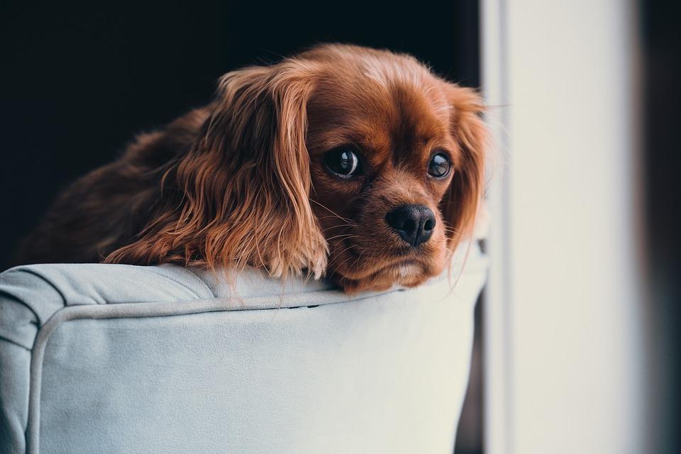Queda de pelo em cachorros: 6 dicas para evitar!