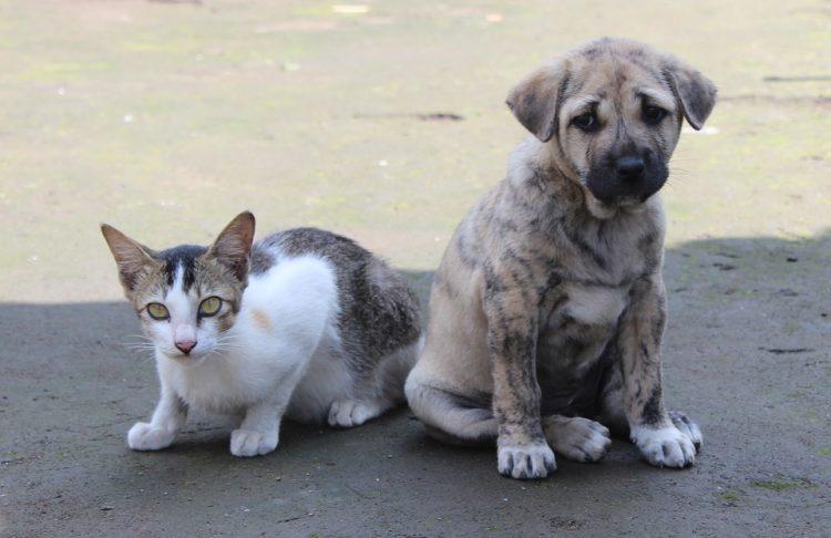 Como ajudar animais abandonados