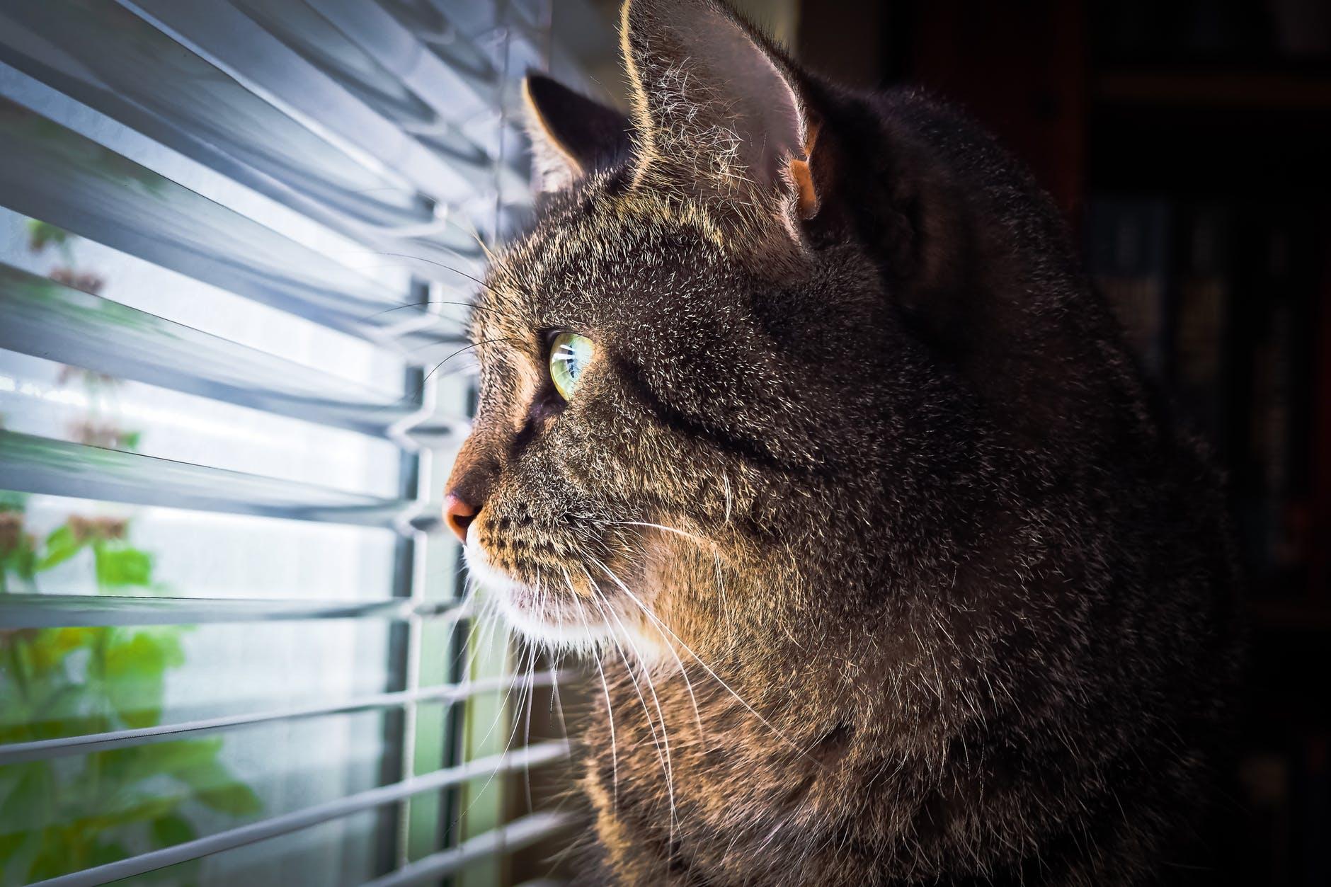 Feche janelas, portas e persianas, evitando, assim, que seu pet fuja