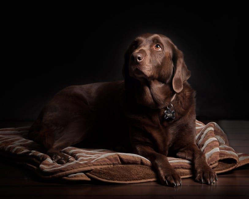 Prepare um local adequado para o descanso do seu melhor amigo: nessa fase da vida, ele deverá passar mais tempo deitado