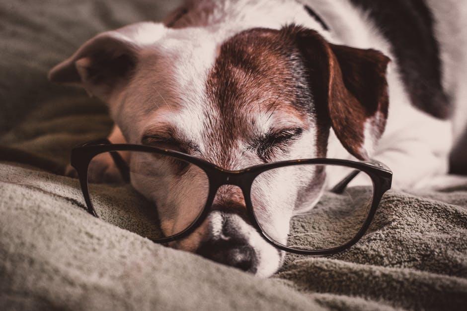 Cuidados com cães idosos: saiba mais sobre a terceira idade canina